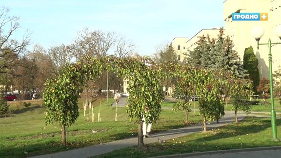1500 деревьев и 2500 кустарников высадят в Гродно в этом году