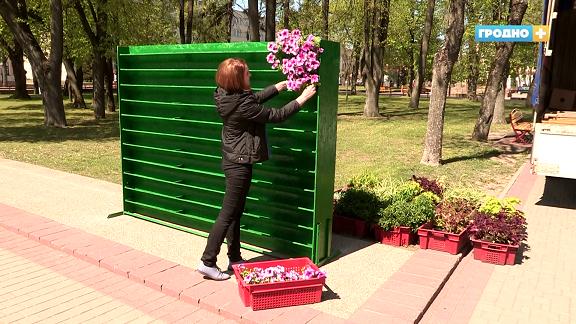 В Гродно появились цветочные фотозоны. Для Беларуси это эксклюзив