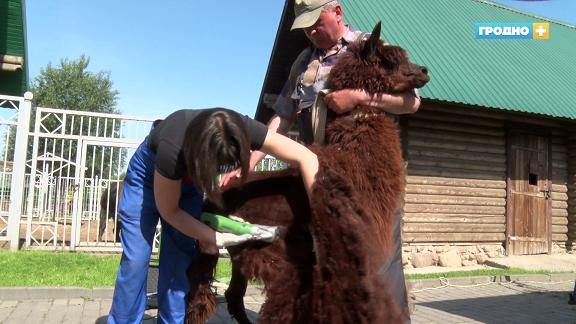Парикмахерские услуги и личные бассейны: как живут питомцы зоопарка в начале лета